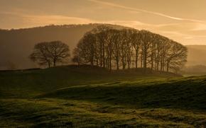 Картинка поле, деревья, пейзаж, утро