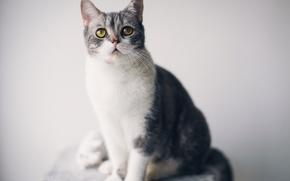 Картинка глаза, кот, зрачки, глядя, сосредоточены