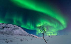 Картинка зима, небо, звезды, снег, горы, ночь, сияние, дерево