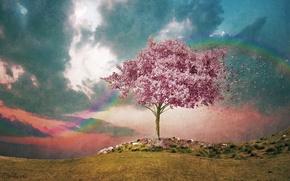 Картинка небо, ветер, радуга, акварель, цветение, фактура, розовое дерево