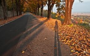 Картинка Trees, Colors, Дорога, Тени, Road, Autumn, Leaves, Листопад, Fall, Листва, Осень