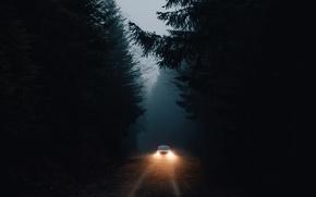 Обои машина, лес, свет, темнота, фары
