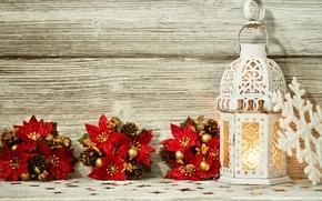 Картинка цветы, праздник, фонарь, Новый год, flowers, New Year, lantern