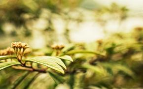 Картинка листья, макро, деревья, фон, обои, растение, размытие, листик, wallpaper, листочки, широкоформатные, background, leaves, боке, полноэкранные, ...