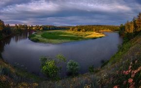 Обои цветы, деревья, берег, Московская область, Россия, облака, небо, трава, Озерное, река, лес