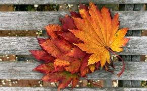Картинка осень, макро, листва, доски