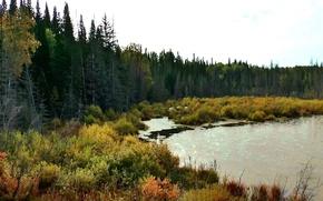 Картинка лес, природа, болото, тайга, Сибирь