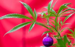 Картинка листья, игрушка, растение, новый год, рождество, шарик