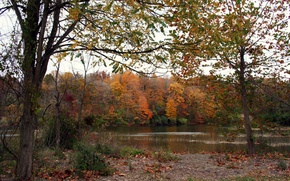 Картинка осень, лес, озеро, листва, forest, Autumn, lake, leaves, fall
