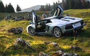 Картинка Roadster, Lamborghini, Nature, LP700-4, Aventador, Supercars, Silver, Rear, Door