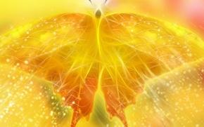 Обои желтый, бабочка