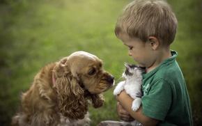 Обои собака, кошка, мальчик