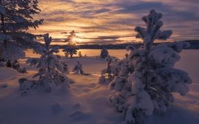 Картинка зима, снег, деревья, закат, Норвегия, сугробы, Norway