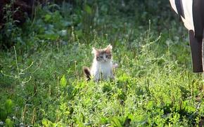 Картинка трава, солнце, котенок