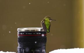 Картинка snow, macro, birds, animal, lens, situation, Hummingbirds
