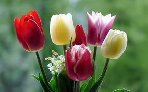 Картинка макро, цветы, природа, тюльпаны