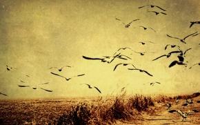 Картинка птицы, стиль, фон