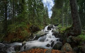 Картинка лес, водопад, Болгария, Bulgaria, Rila National Park, Skakavica Waterfall, Национальный парк Рила