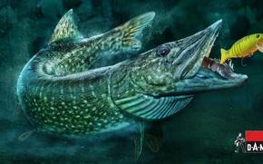 Обои рыбалка, рыба, приманка, щука