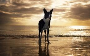Картинка пляж, собака, USA, Florida, Fort Myers Beach