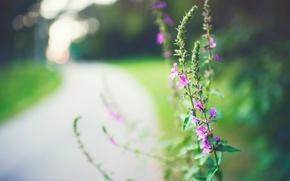 Картинка макро, цветы, фон, розовый, widescreen, обои, растение, размытие, wallpaper, цветочки, широкоформатные, background, полноэкранные, HD wallpapers, …