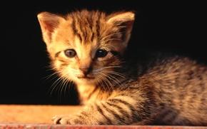 Картинка котенок, жалостлевый, грусная мордочка