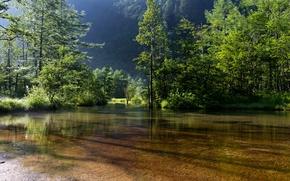 Картинка пейзаж, природа, зелено. деревья, тень. вода