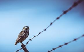 Картинка птица, провода, Сова