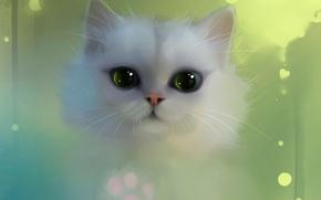 Обои apofiss, белый, глаза, кот