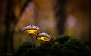 Картинка осень, лес, макро, свет, природа, грибы