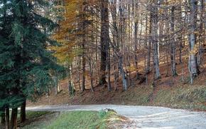 Картинка forest, trees, wild