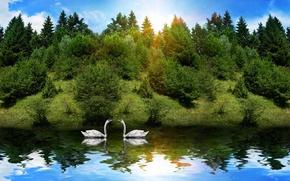 Обои лес, животные, солнце, отражение, река, лебеди