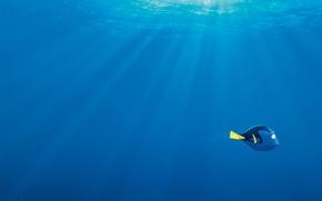 Картинка море, пузырьки, синева, мультфильм, рыбка, лучи света, Дори, Finding Dory, В поисках Дори
