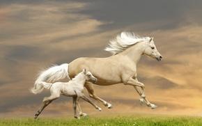 Картинка трава, лошадь, кони, бег, бежит, жеребёнок