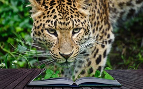 Обои книга, заросли, джунгли, 3d, хищник, леопард