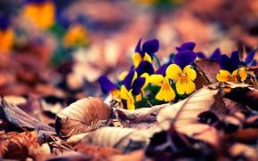 Картинка осень, листья, цветы, flowers, autumn, leaves, боке, bokeh
