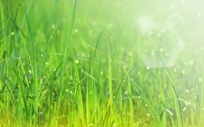 Картинка зелень, капли, макро, лучи, свежесть, роса, травка, солнца