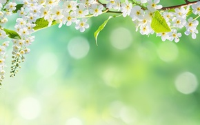 Обои цветы, боке, дерево, лепестки, природа, весна