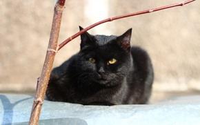Картинка животные, кошки, котята