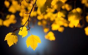 Картинка листики, beatiuful, широкоэкранные, размытие, leaves, HD wallpapers, обои, tree, листочки, дерево, листья, полноэкранные, background, желтые ...