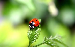 Обои зеленый, Лист, жук, фокус