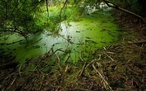 Картинка трава, деревья, болото