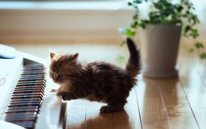Обои кошка, © Ben Torode, синтезатор, catcert, Daisy