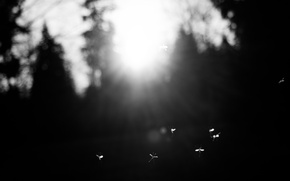 Картинка Sun, Flying, Wings, Insect, Black and white, Moment, Flies