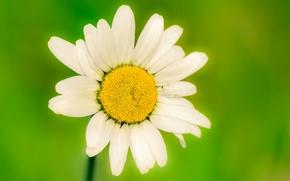 Обои цветы, цветочки, цветочек, цветок, flower