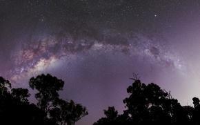 Картинка деревья, космос, звезды, млечный путь