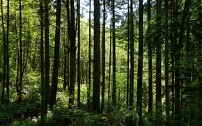 Обои лес, деревья, кусты, трава, зелень, лето