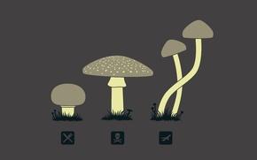 Картинка грибы, значки, галлюциногены