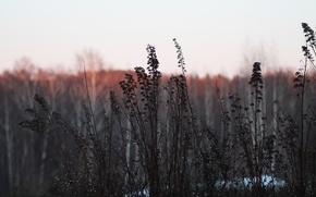 Картинка закат, роса, растения, кусты