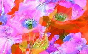 Картинка линии, цветы, рендеринг, мак, лепестки